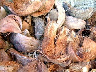 タバナン瓦のココナッツ