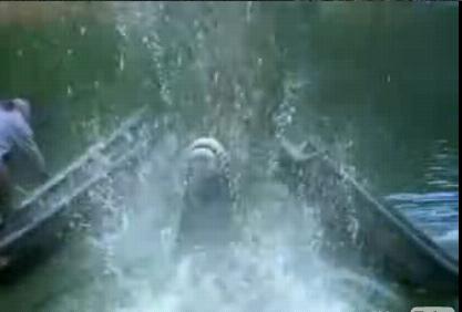 船を破壊する ワニ。