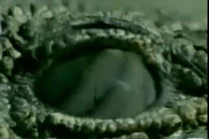 ラプター 鰐眼