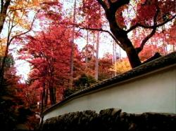 JRKyoto-0802.jpg