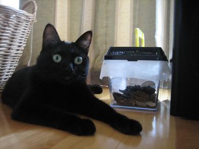 黒猫と虫かご