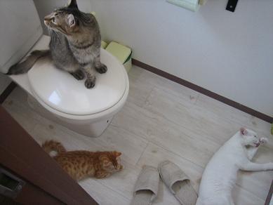 トイレより愛を込めて