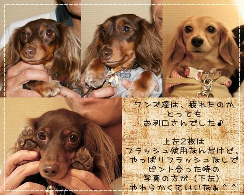 20081109_15.jpg