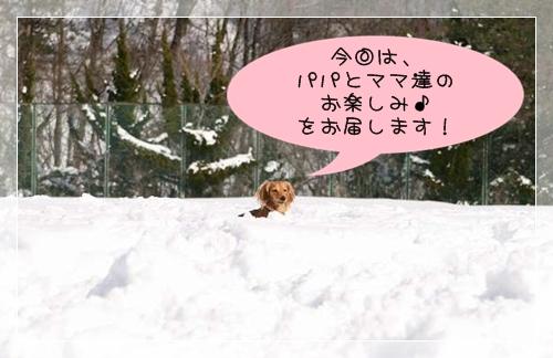20090125_77.jpg