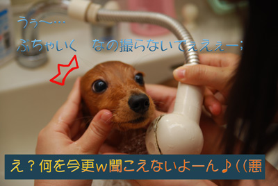 coco056web.jpg
