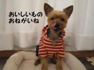 20090303hinamatsuri4