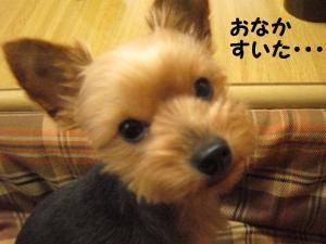 20090306cyoko3