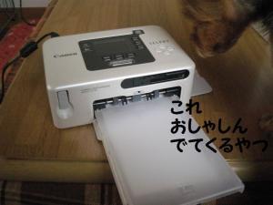 20090307syashin2