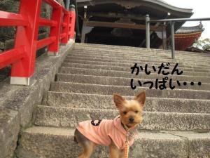 20090316nakayama2