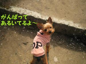 20090316nakayama5