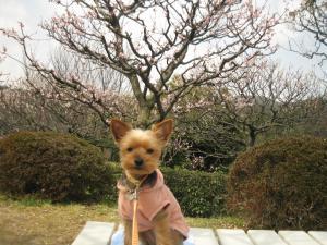 20090316nakayama6