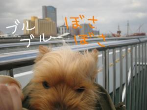20090323kaiyukan8