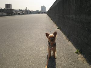 20090325yodogawa3