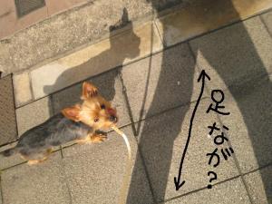 20090325yodogawa5