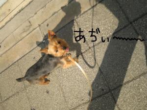 20090325yodogawa6