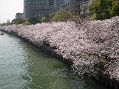 20090406sakura1