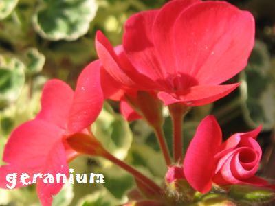 20090407hanatako11