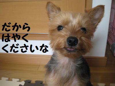 20090410hanaoyatsu6