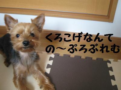 20090410hanaoyatsu8