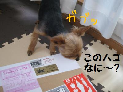 20090420niku1