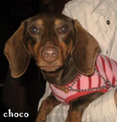 20090422chocococo1