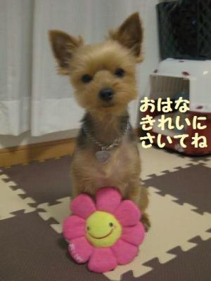 20090503tsubomi8