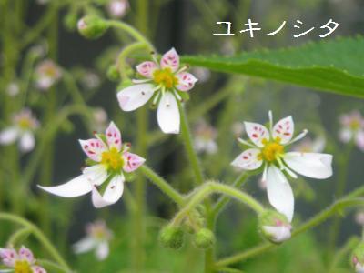 20090513berandahana5