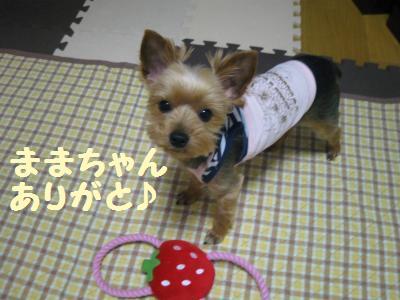 20090616youfuku2