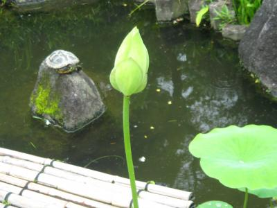 20090705yokohama9