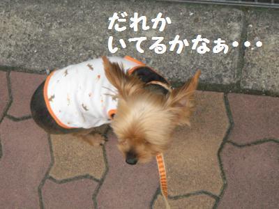 20090911sanpopan2