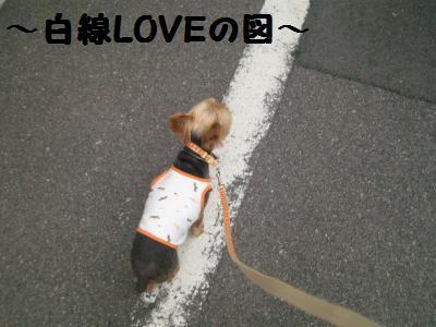 20090911sanpopan3