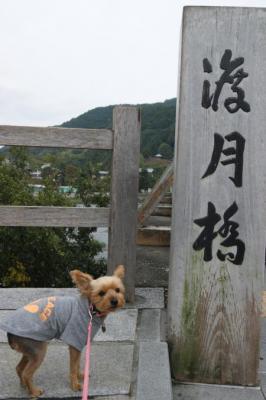20091028arashiyama21