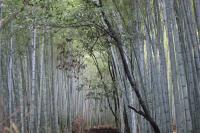 20091028arashiyama6