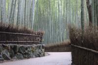 20091028arashiyama8