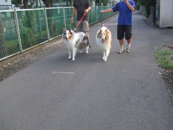 並んでお散歩♪