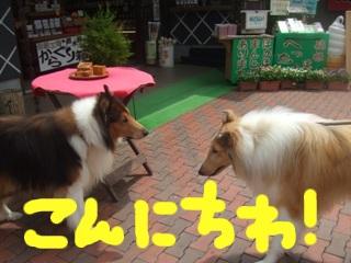 blog0163.jpg