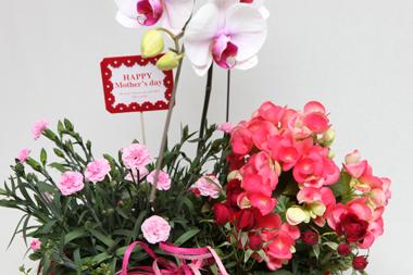 花夢オリジナル母の日限定寄せ鉢~胡蝶蘭(コチョウラン)入り