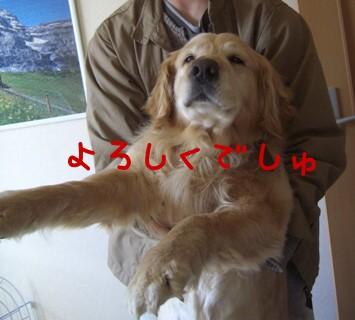 CIMG1636_20080313145520.jpg