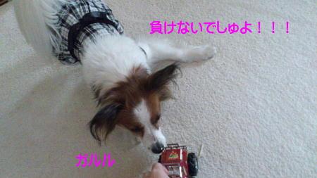 12042009_1.jpg