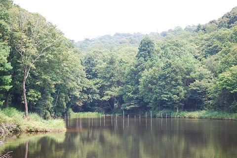 マスが泳ぐため池