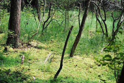 オオミズゴケ湿地