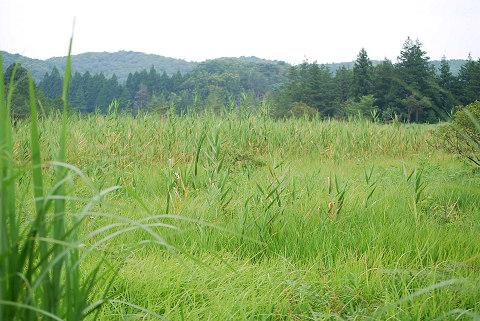 長ノ山湿原の風景
