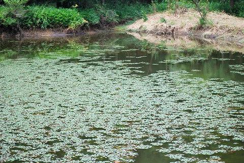 一面水草の池