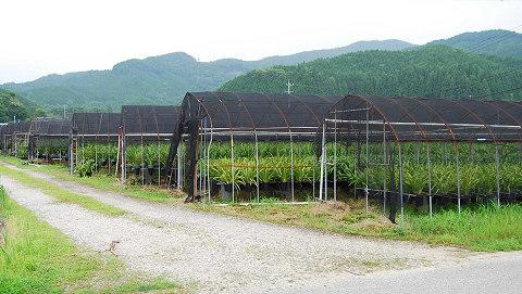 駒が原のラン栽培
