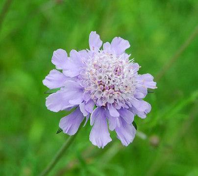 薄紫の花2