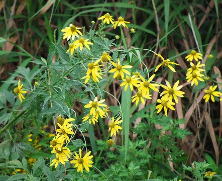 河床に咲く黄色い花
