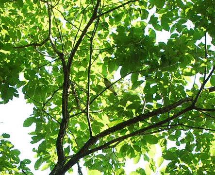 枝に止まるエナガ
