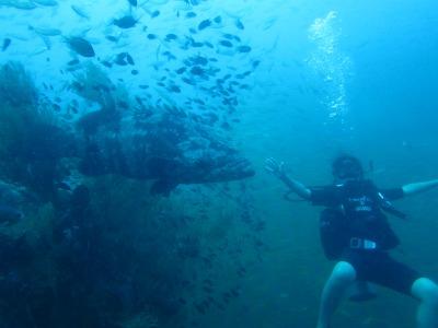 タオ島 チュンポン ファンダイビング ヤイトハタ