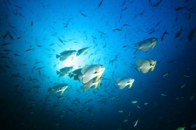タオ島、ダイビング、チュンポン
