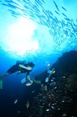 タオ島、ダイビング、ライセンス取得
